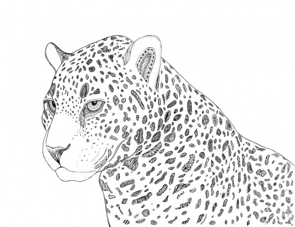 leopardprintweb