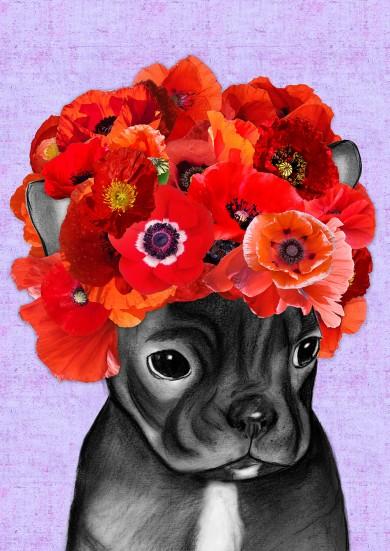 A Puppy Called Poppy