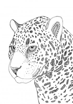 Leopard Limited Edition Print