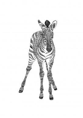 Zebra Postcard